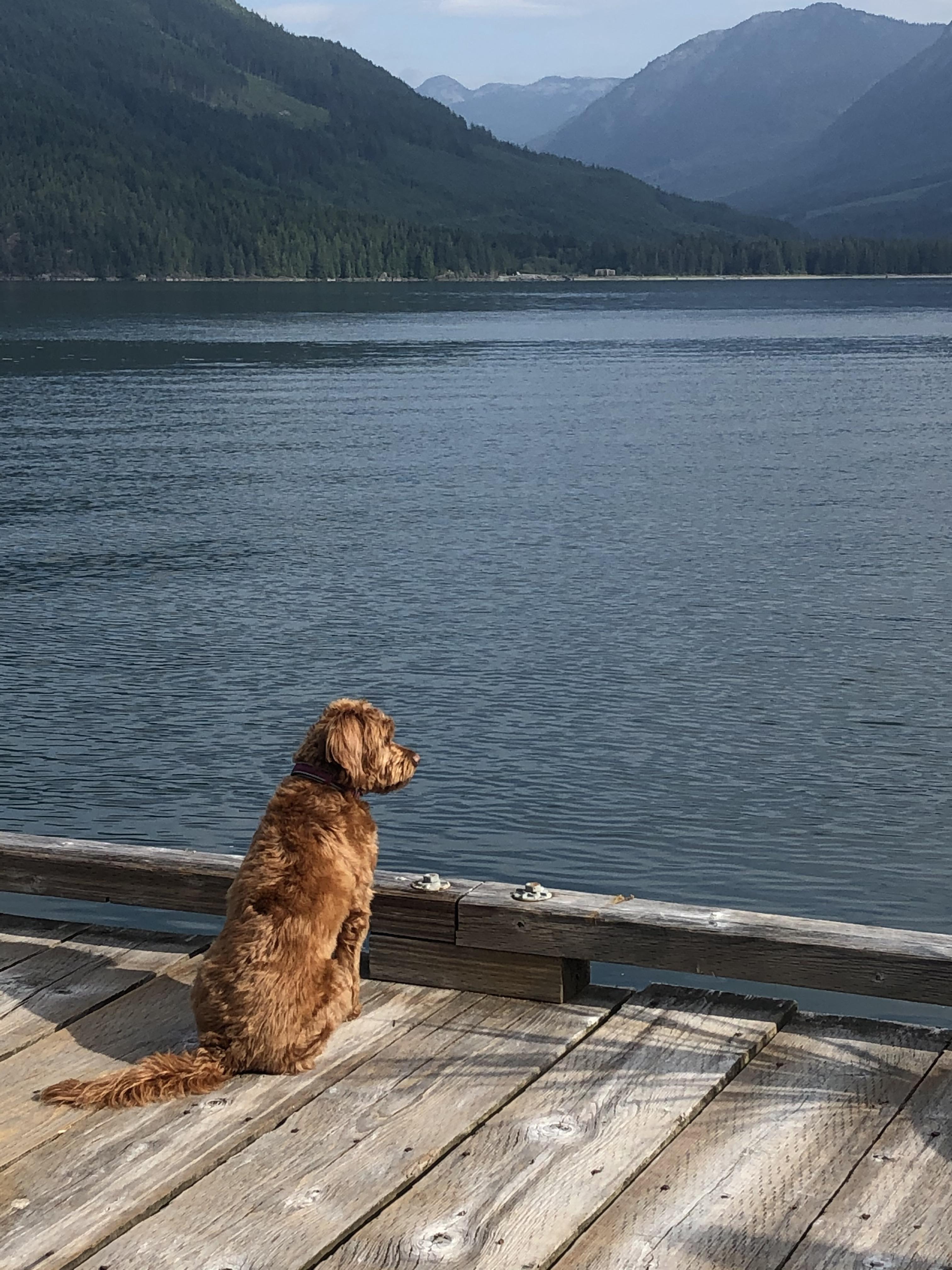 Scout enjoying the view