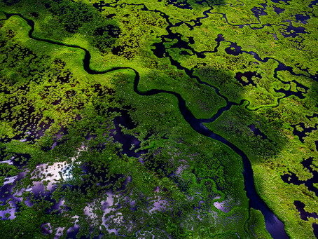Above the Everglades