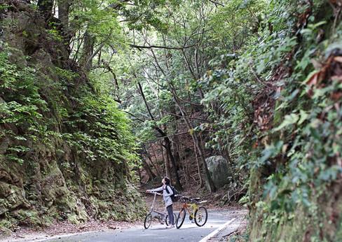 自転車レンタル Bicycle rental