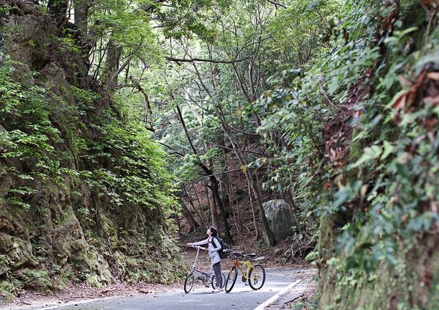 Bicycle rental