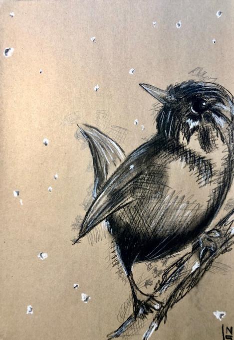 Snowbird.JPEG