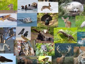 Ta en titt på våra landskapsdjur!