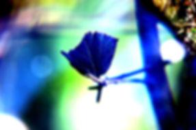 blue leaf.jpg