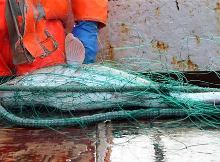A fishy Icelandic tale