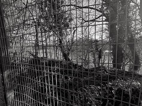fenced quarry reduced.jpg