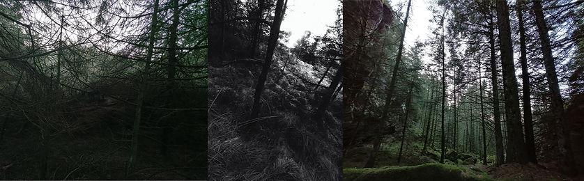 3 tree images.jpg