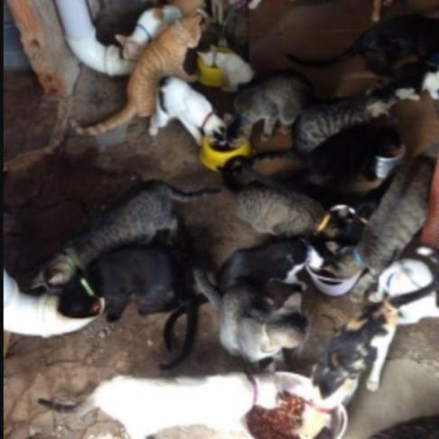 Projeto que recolhe gatos de rua precisa de doação de ração