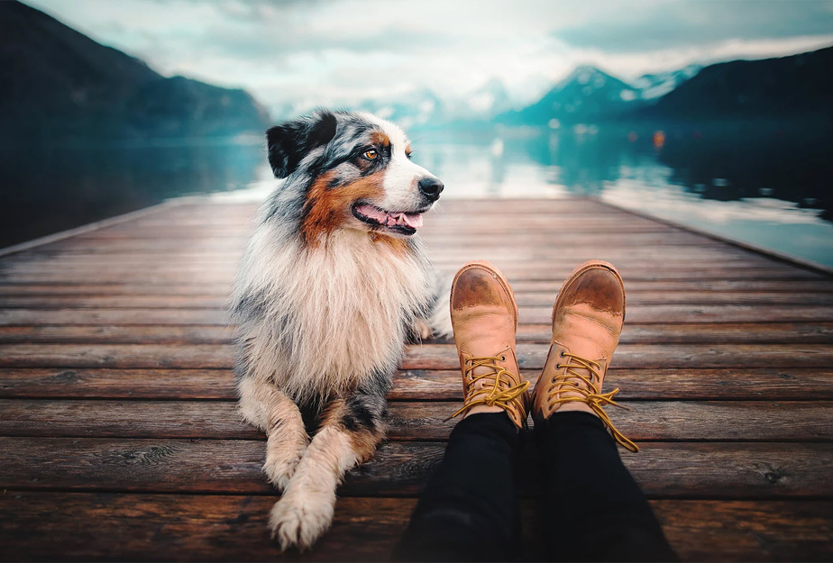 person sitting with border collie dog on a lake pier overseeing the mountains