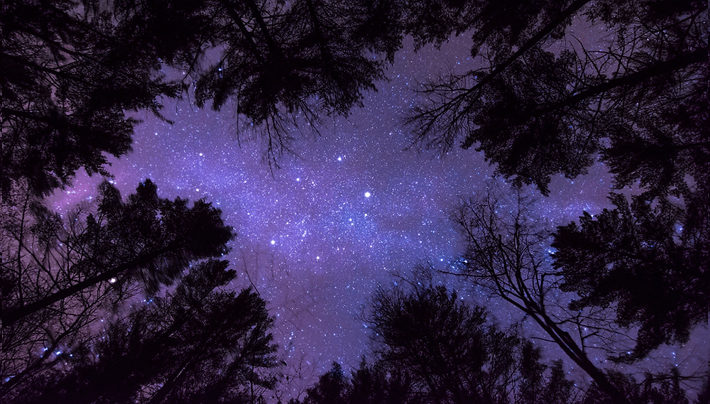 tree silhouettes and the starry sky