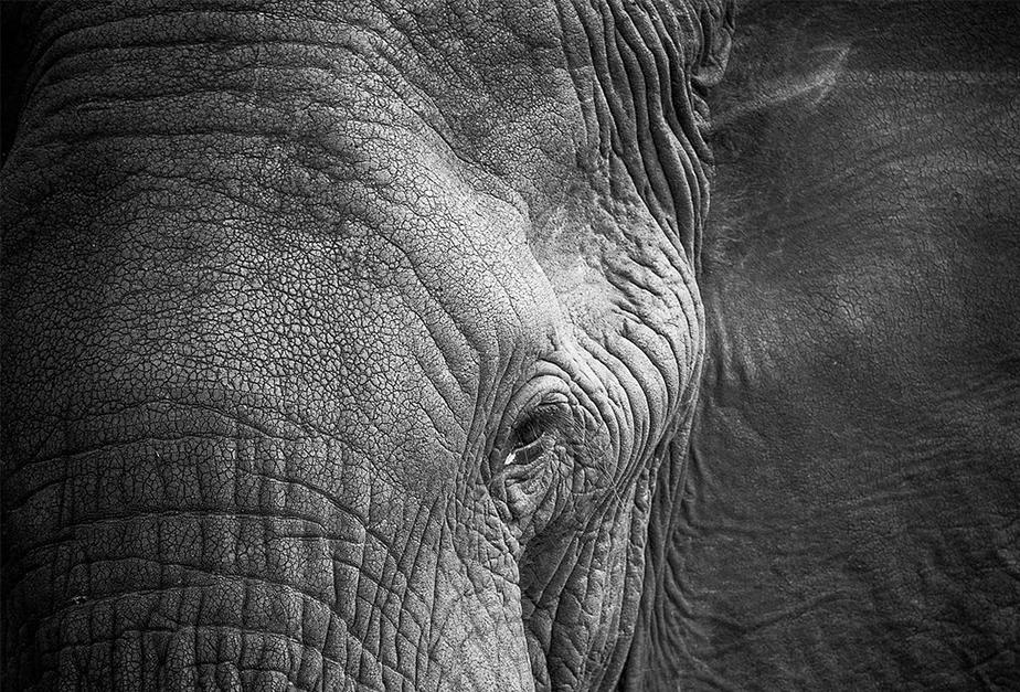 close-up image of elephant eye