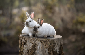 two bunnies sitting on a lodge