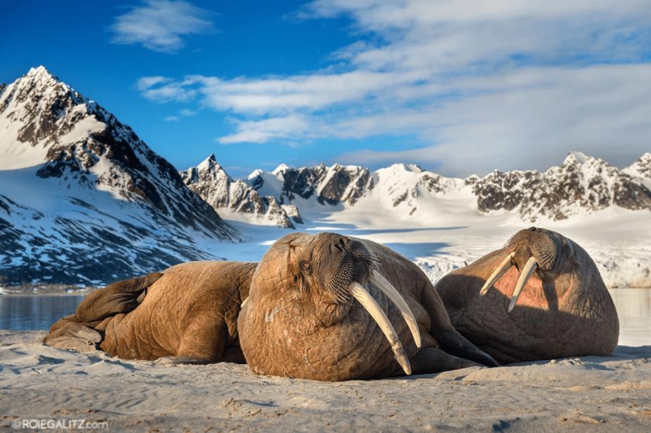 sea lions chilling