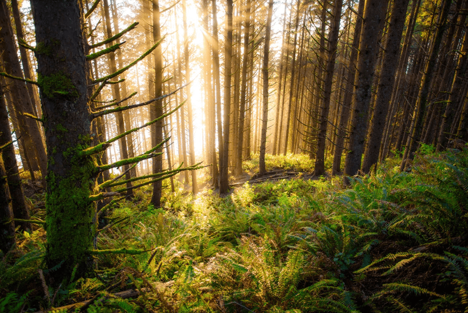 sunshine passing through forest trees