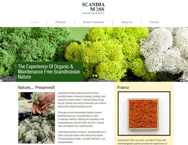 Scandia Moss - Preserved Cladonia Stellaris