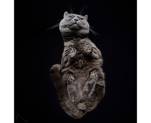 Wix Pet photography by Underlook