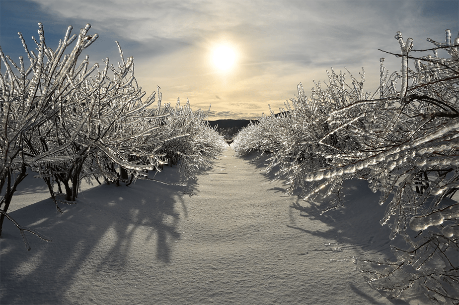 winter forest in the sun