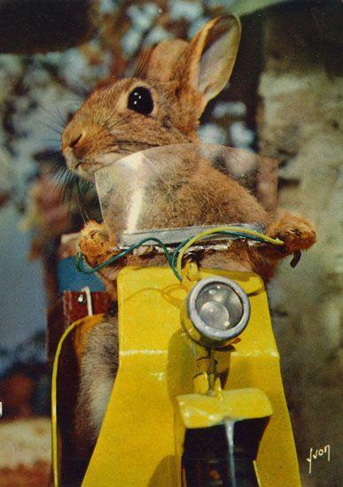 rabbit on motorcycle