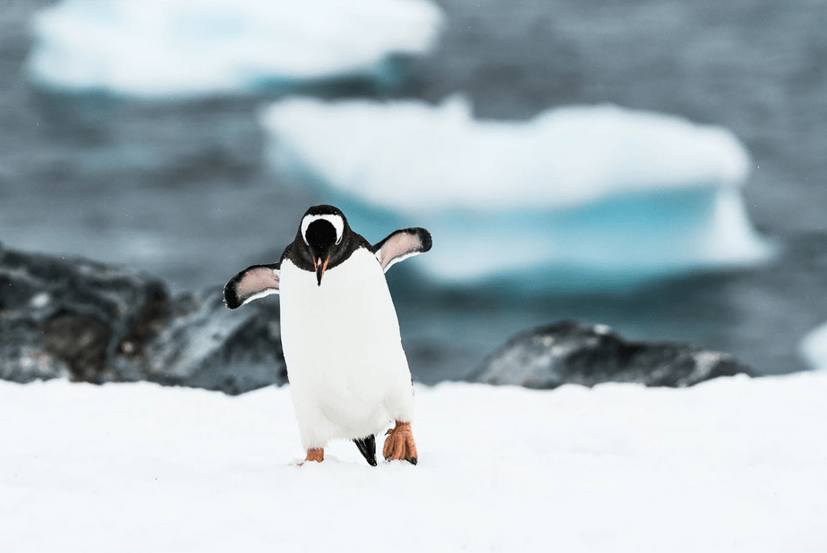 penguin walking through the snow over the sea