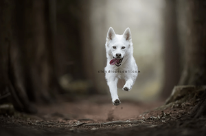Wix Pet photography by Claudio Piccoli