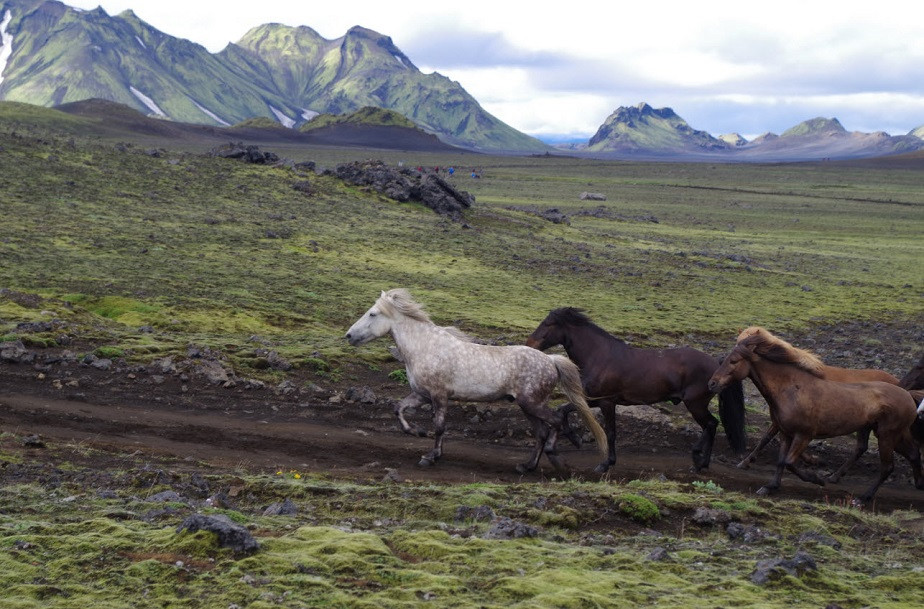 Horses running in the Iceland countryside by Wix photographer Martin Erwann