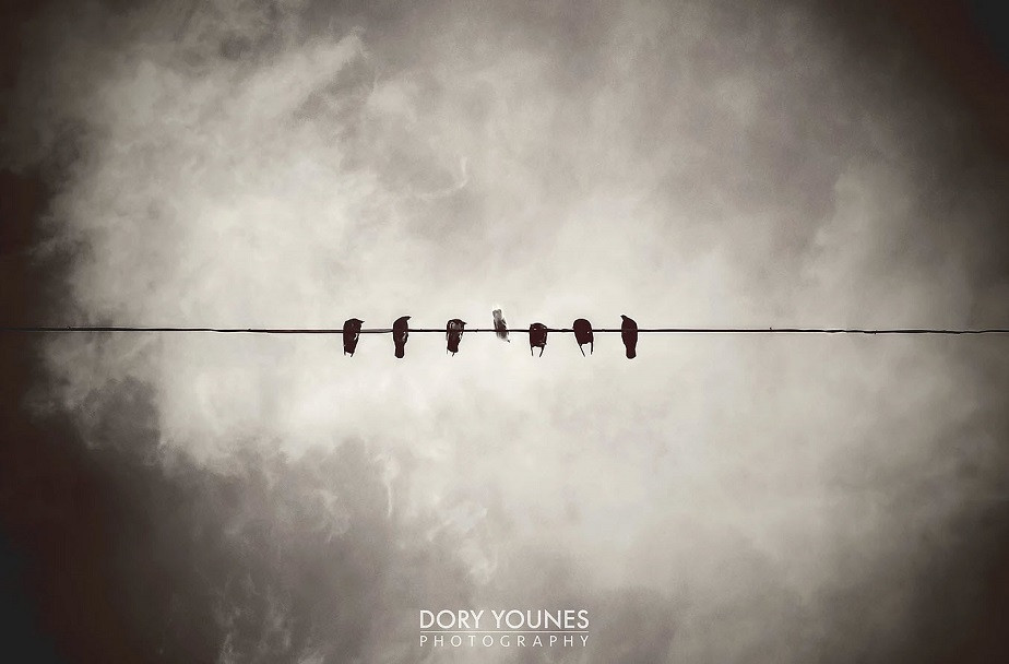 Birds on a Wire by Wix Photographer Dory Younes