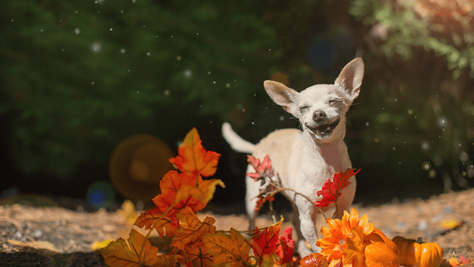 cute dog in autumn leaves