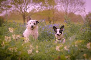 Wix Pet photography by Brad Damms
