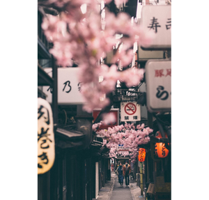 japan street with pink flowers lights and signs
