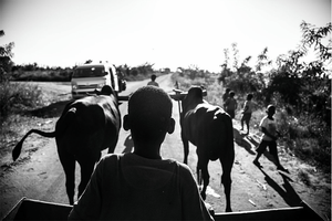 black and white image of a boy guiding a carriage pulled by oxes