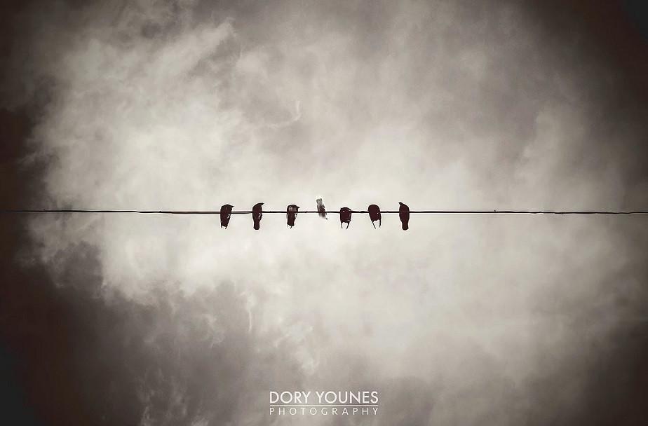 Pájaros Blanco y Negro del fotógrafo Wix Dory-Younes-3