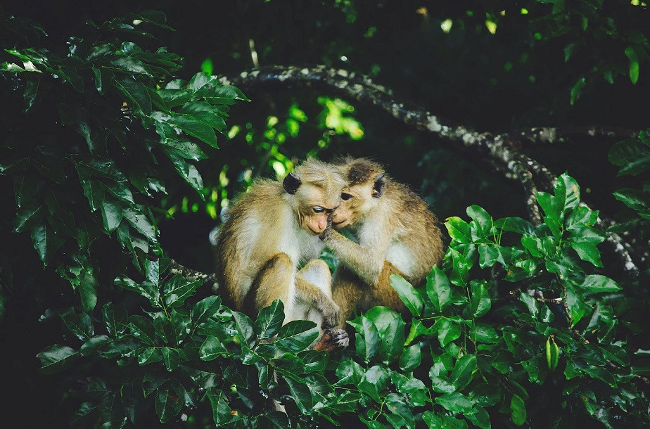 nature photography two monkeys talking by wix photographer rosie litterick