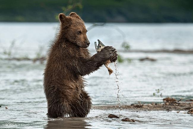 ¿Qué le dice el oso al pez?