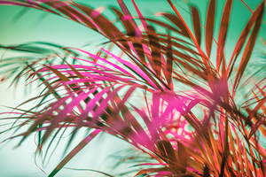 neon color palm tree leaves