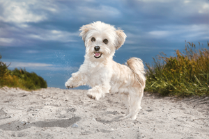 Wix Pet photography by Ramona Bach