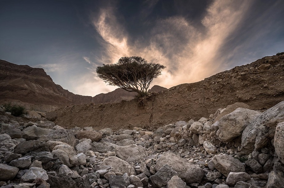 nature photography tree in the desert by wix photographer tomasz solinski