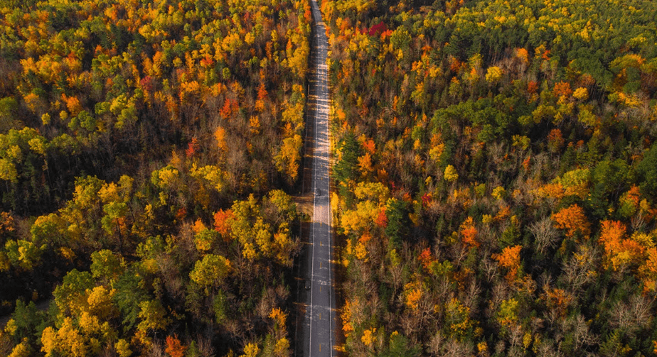 drone shot of road and autumn forest