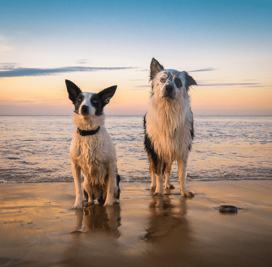 two dogs on the beach shore during the sunset