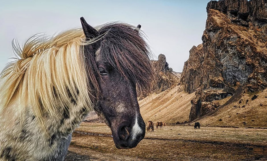 nature photography of a horse by wix photographer northern world
