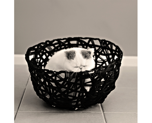Wix Pet photography by Crea8tive photography