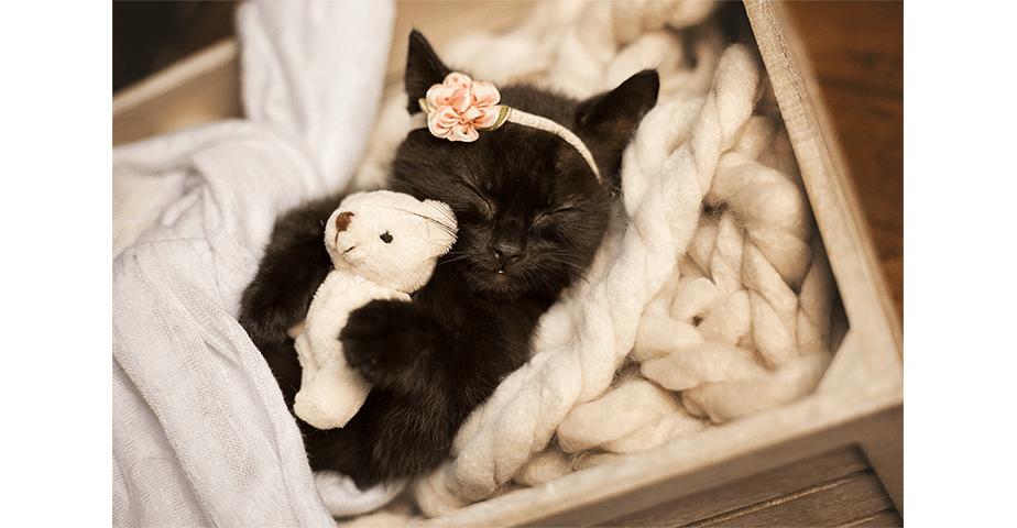 Fotografía-de-Bebés_Me pareció ver un lindo gatito