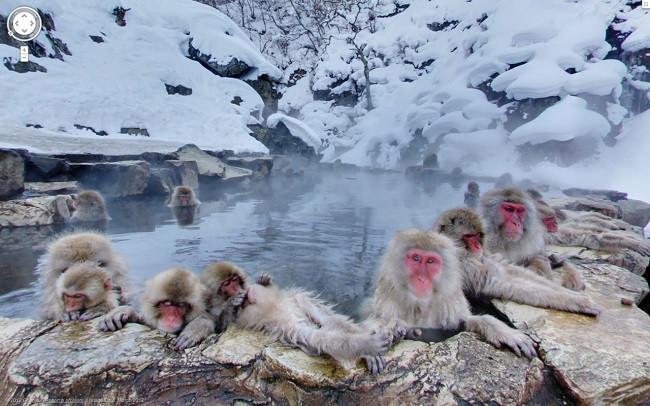 Weird Google Street View: Monkey Spa