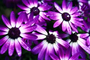 purple flowers with rain drops