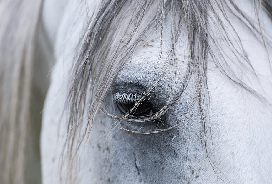 close-up image of white horse eye