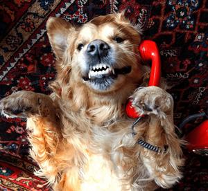 Ele está cãoversando ao telefone. Hã. Hã. Pegou o trocadilho? Cão-versando!
