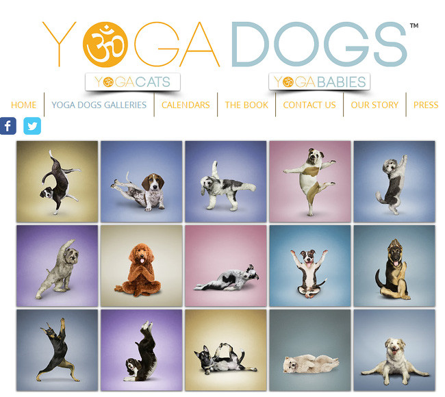 Yoga Dogs >>
