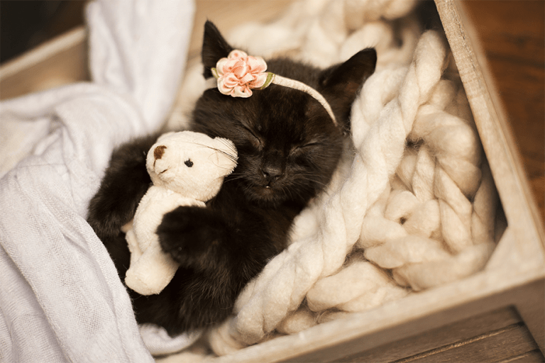 Cute cat with teddy bear photography