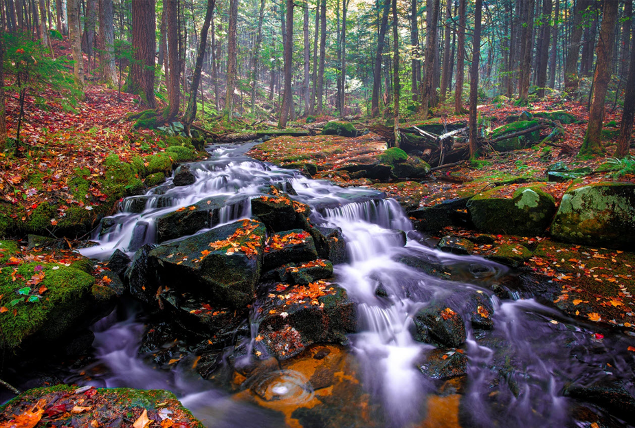 a beautiful autumn forest with a moving river passing through