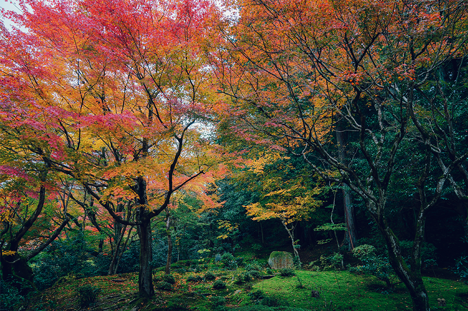 bright colored trees on a forest during autumn