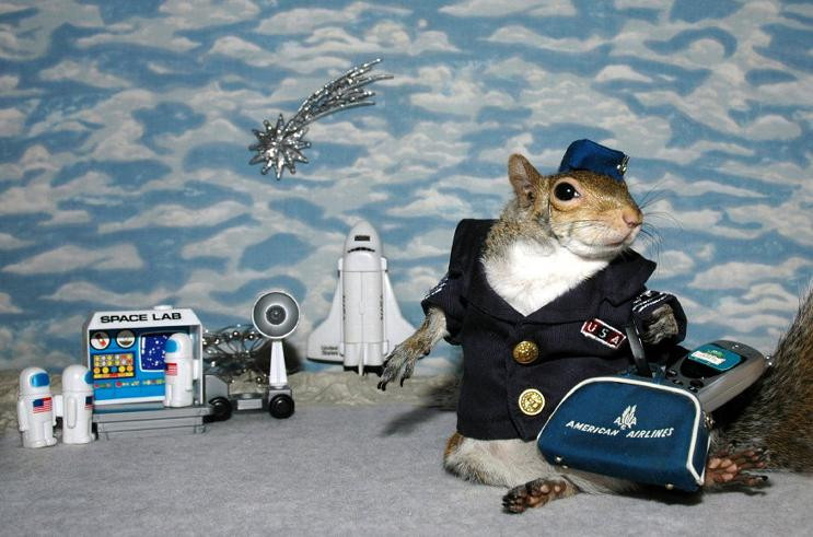 squirrel dressed as a pilot
