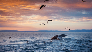 20 Beautiful Nature Photos That Will Leave You Speechless
